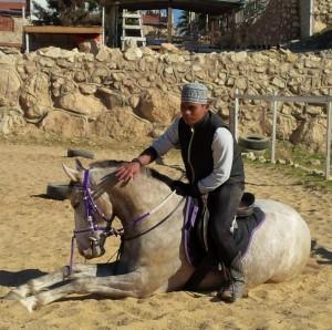 Melatih Kuda Duduk Ketika Penunggang Di Atasnya