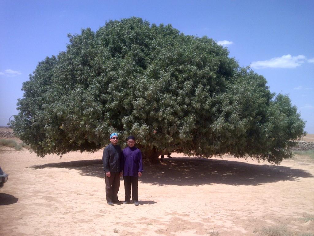 Pohon Rasulullah SAW